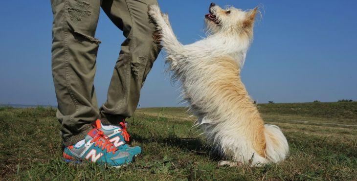 RECENZIA NA KNIHU: Poslušnost i bez vodítka. Jak vychovat soustředěného a sebevědomého psa