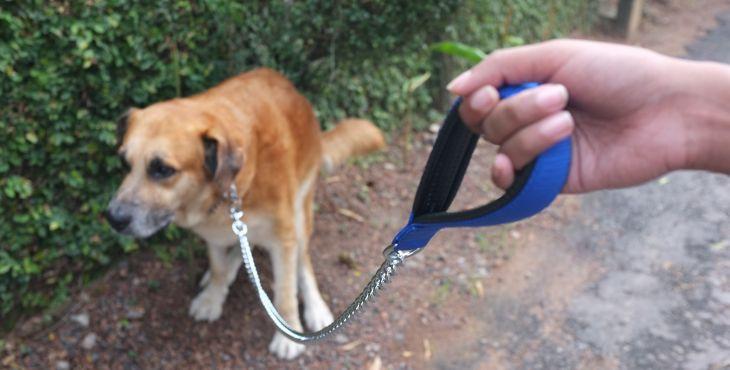 Psie exkrementy môžu spôsobiť katastrofu!